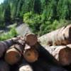 Aplicație de mobil pentru raportarea tăierilor ilegale de pădure