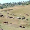 Cinci legi extrem de importante pentru zonele montane