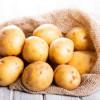 Deşi suprafaţa cultivată a fost mai mare, producţia de cartofi a scăzut