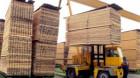 Forestierii acuză: Interzicerea exportului de cherestea duce la falimentarea sectorului
