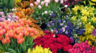 Business-ul cu flori și-a dublat cifra de afaceri în ultimii cinci ani
