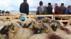 Ciobanii atacă mafia din oierit