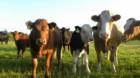 Creşterea animalelor la Sânmărtin