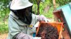 """Apicultorul Aron Stoica: """"De ce mor albinele"""" (II)"""