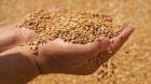 Creştere spectaculoasă a exportului de cereale